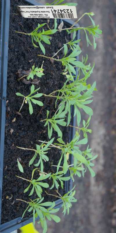 plant-tags-for-punnets