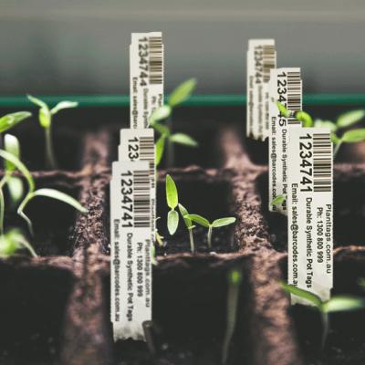 planttags.com.au-seeding-trays-tags